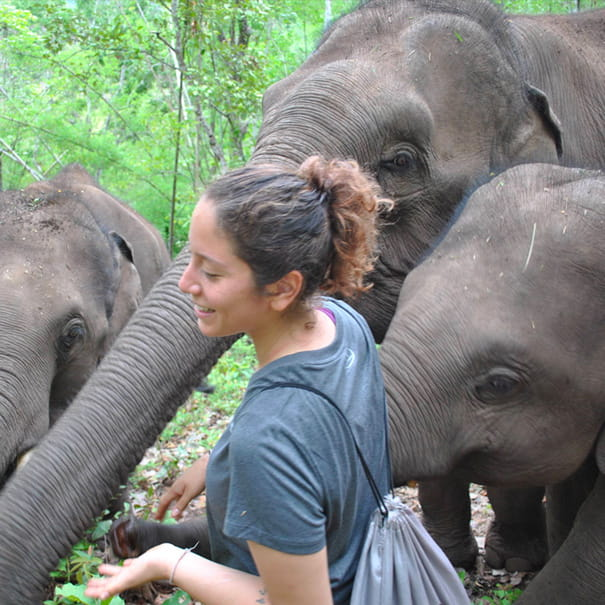 Volunteer in Thailand                                                                 | Programs, Guidance & Reviews