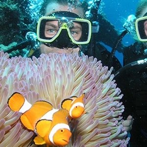 Volunteer in Scuba Diving                                                                     | Programs, Guidance & Reviews