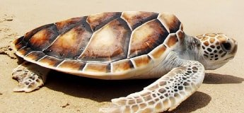 Turtle on Sand