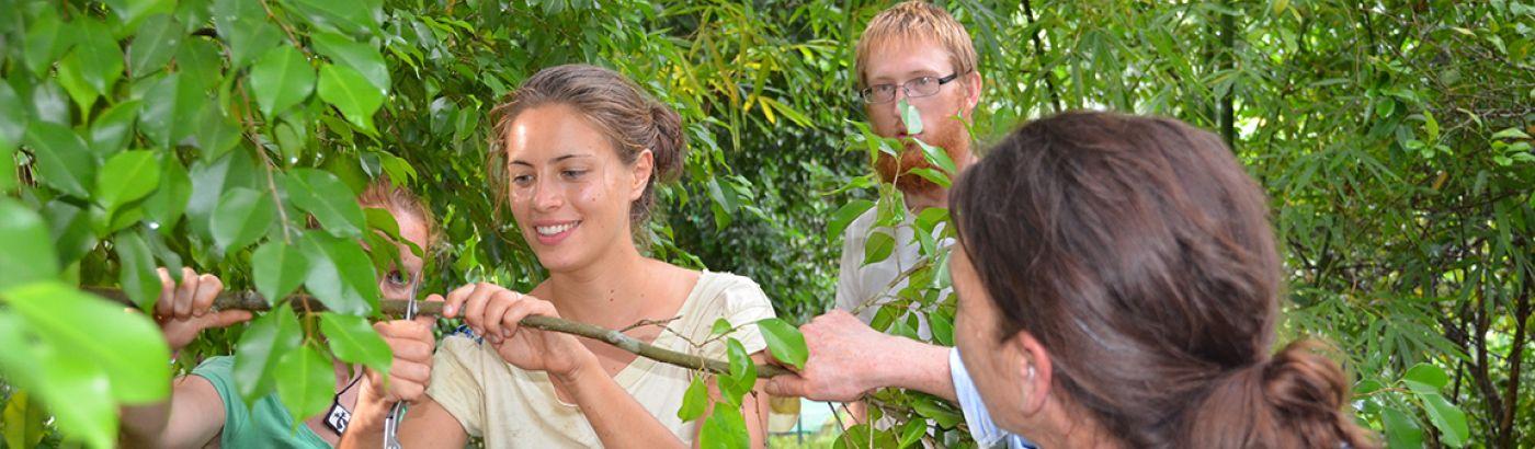 ▷ Environmental Volunteering | Top 10 Internships 2019