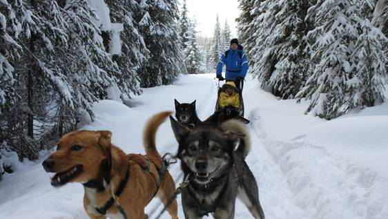 Huskies Caretaker & Dog Sled Assistant