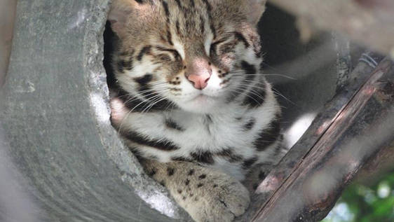 Thai Wildlife Rehabilitation & Care