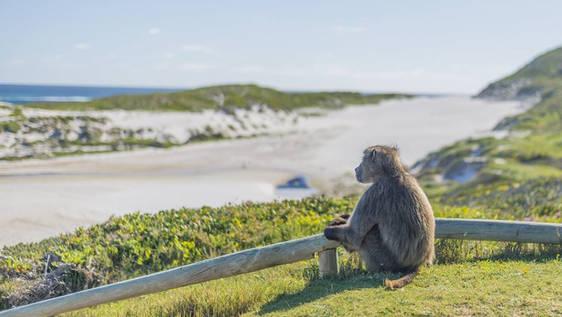 Monkey Rehabilitation Helper