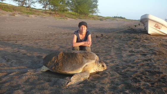 Sea Turtle Conservation Holiday