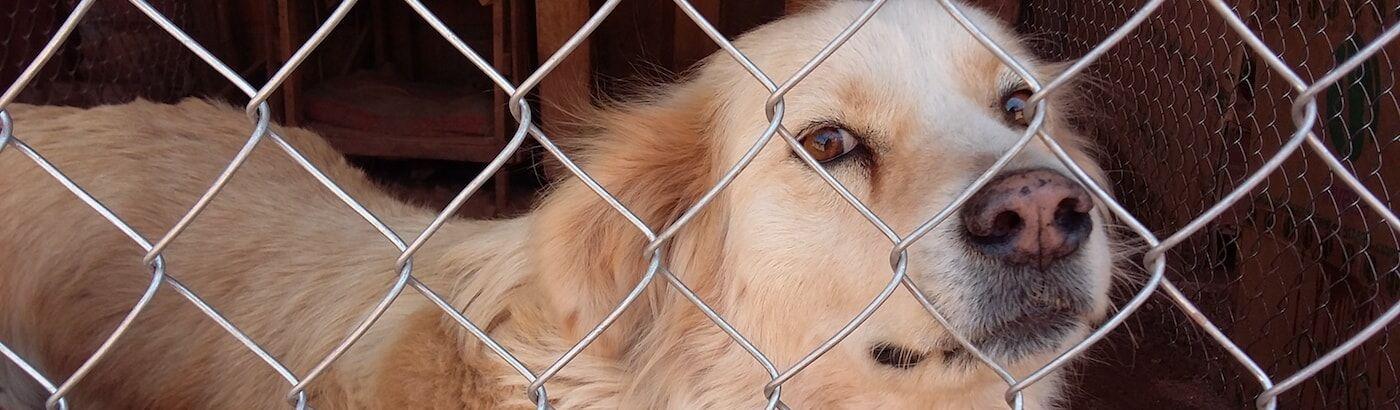 ▷ Animal Sanctuary Volunteer | Street Animal Projects 2019