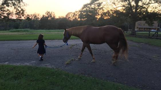 Children's Autism & Horse Therapy Assistant