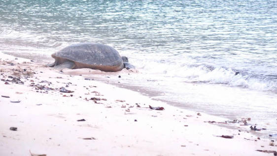 Jungle Trekking and Sea Turtle Conservation