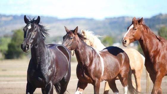 Horse Rescuer & Caretaker