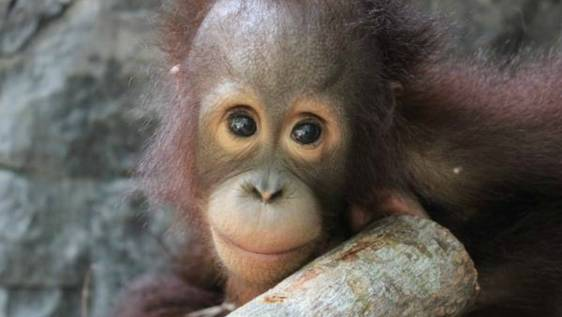 Orangutan and Wildlife Rescue Center