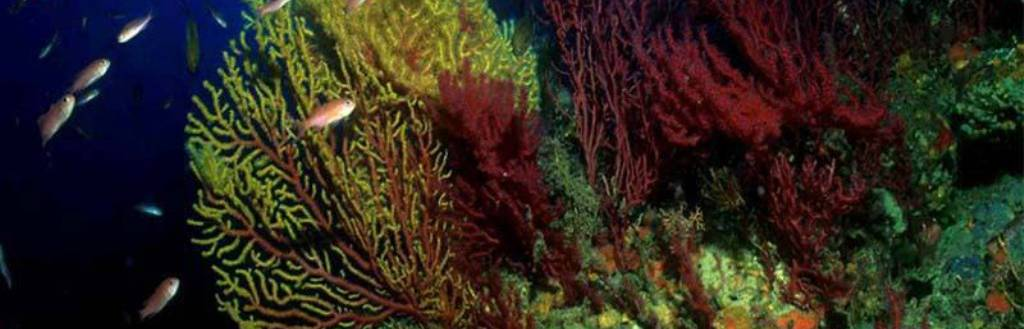 Marine Research and Conservation