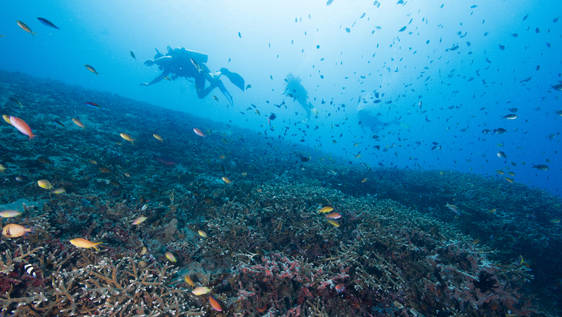 Marine Life Caretaker