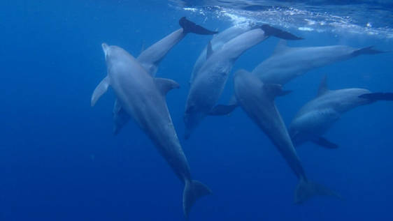 Dolphin and Marine Conservation Assistant