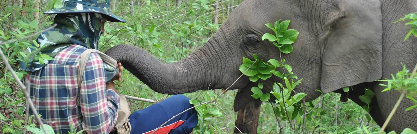 Elephant Sanctuary & Community Immersion