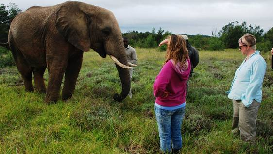 Elephant Conservationist & Caretaker