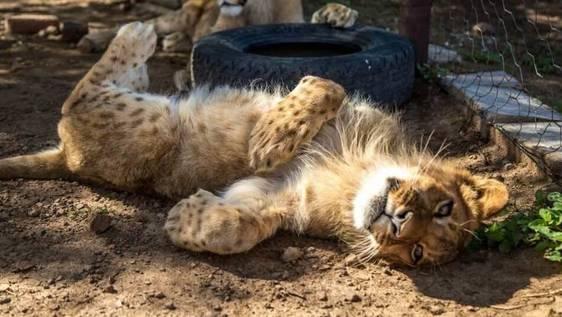 Wild Cat Sanctuary