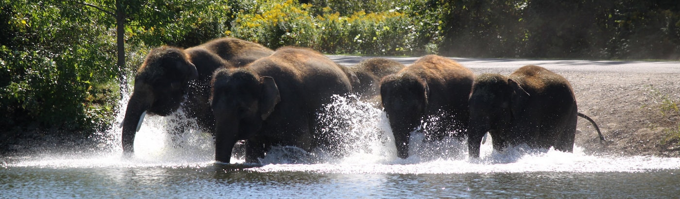 asian-elephant-art-and-conservation-project-dumb-blonde-interracial