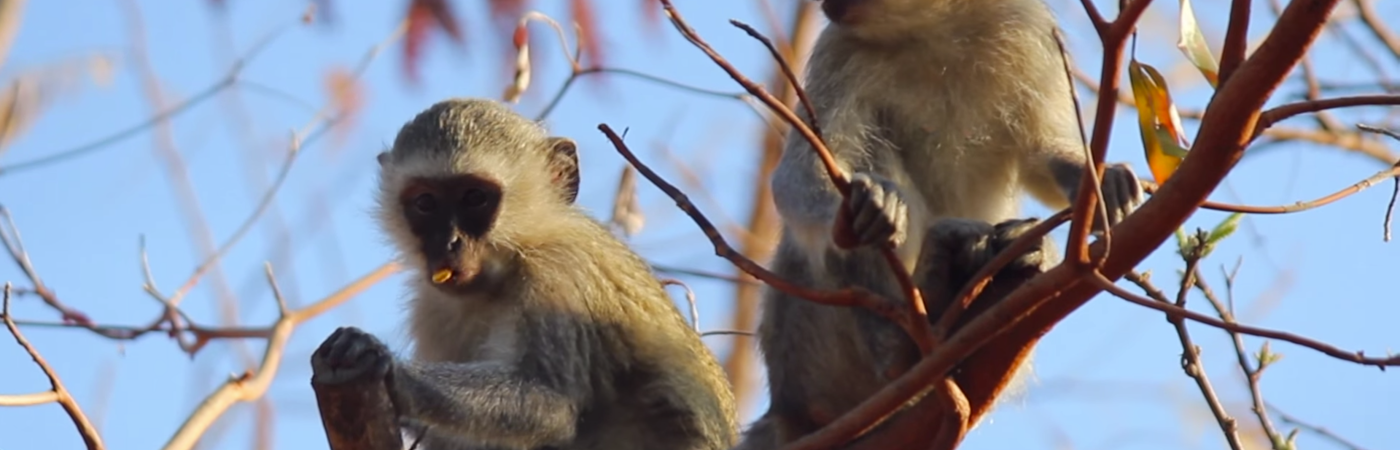 Primate Sanctuary Assistant