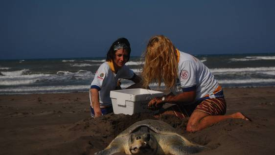 Turtle Conservation Assistant