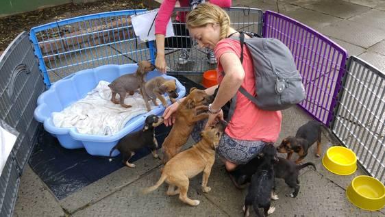 Animal Shelter Assistant