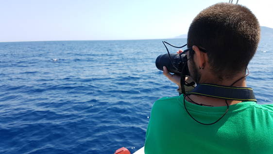 Northern Aegean Dolphin Researcher