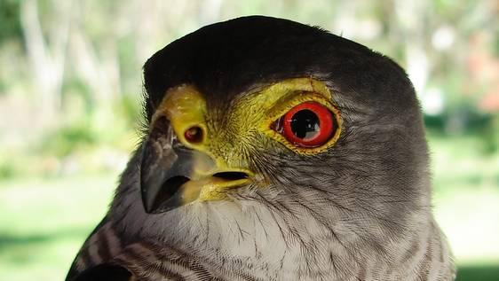Bird Ecology Researcher