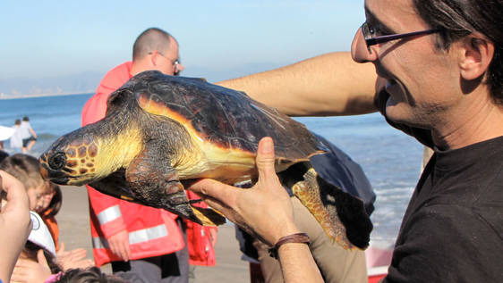 Sea Turtle Conservation in Natural Park