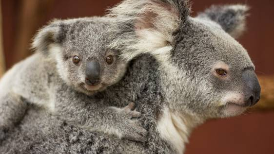 Zoo & Wildlife Hospital Animal Caretaker